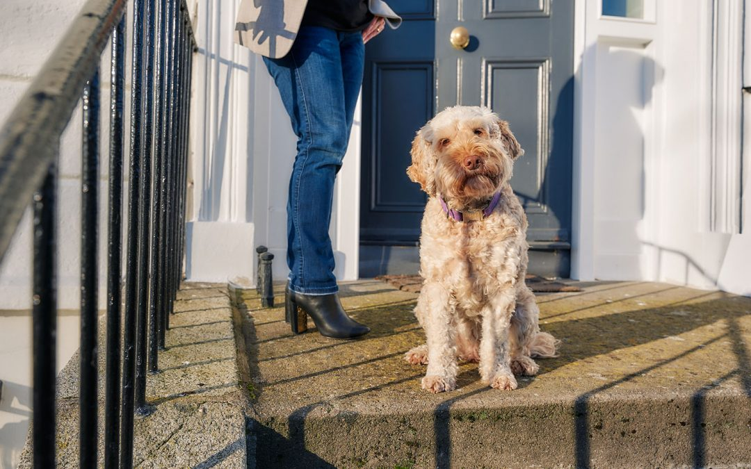 Moving to Dublin with Pets